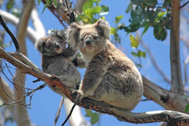 GreatOceanRoad_Australie7